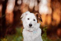 fantastische tractive gps gerat hunde gps tracker mit app die leichte und wasserdichte hund gps halsband erweiterung bild
