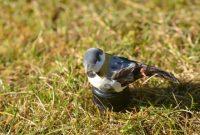 ausgefallene geo versand 3 x petling mit tarnung vogel apfel gras logbucher mehrfarbig 11147 foto
