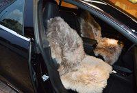 am besten leibersperger felle autofell sitzauflage lammfell naturform mit haltegummi in farbe cappuccino langhaarig fur lederautositze bild